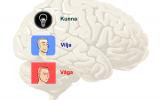 Arbeta med hjärnan